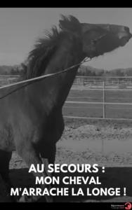 les clés d'un cheval bien eduqué