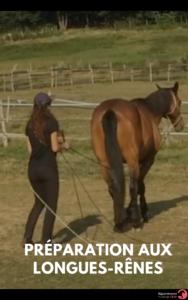les clés d'un cheval bien eduqué (2)